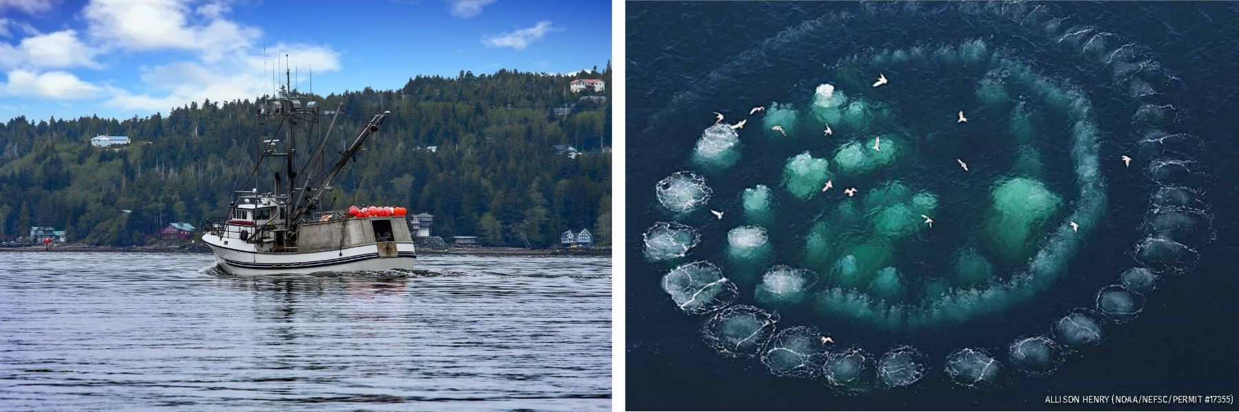 biomimicry applied to solutions in the fishing industry - humpback whales bubble net and spiderweb