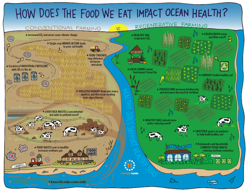 Infographic showing how the food we eat impacts ocean health